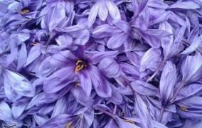 هشدار نسبت به رکورد شکنی تولید زعفران