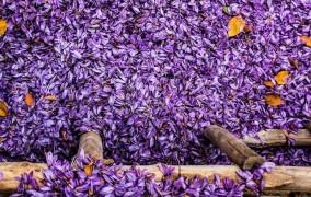 بورس ، قیمت زعفران را واقعی کرد