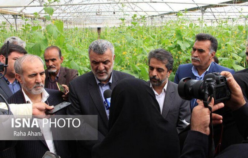 ورود به کشاورزی قراردادی/ زعفران تحت پوشش هلدینگ باشد