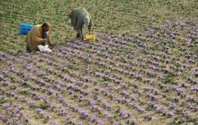 ایجاد زنجیره تولید گیاهان دارویی در همدان