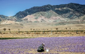 7 توافق طلایی برای افزایش صادرات زعفران